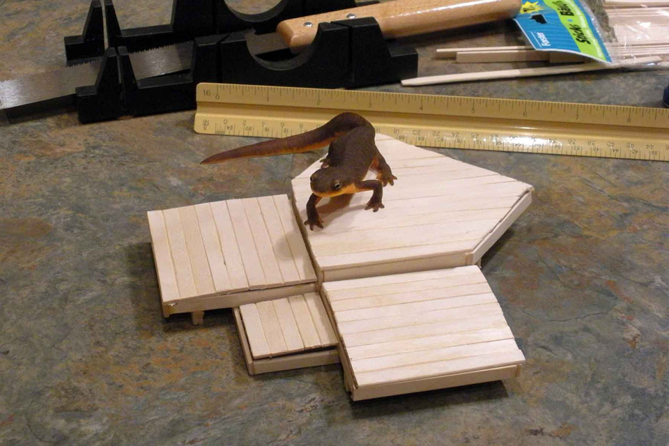Deck model with our pet newt crawling on it